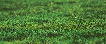 emerald luscious landscape-green emerald landscape-emerald landscape